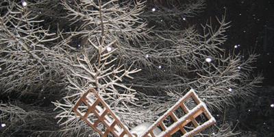 Сказка в зимнем саду