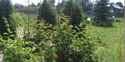 История развития моего сада
