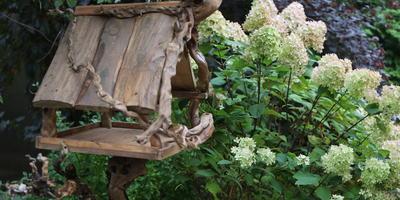 Птичьи столовые, или Как защитить сад от вредителей