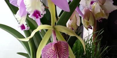 Как правильно досвечивать орхидеи