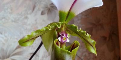Самый лучший свет для орхидей