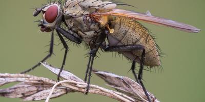10 проверенных способов борьбы с луковой мухой