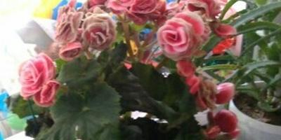 Как называется этот цветок и как за ним ухаживать?