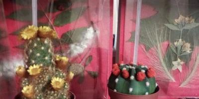Подскажите названия кактусов