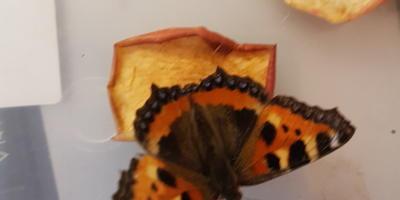 Откуда появились бабочки?