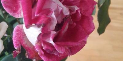 Подскажите названия сортов роз