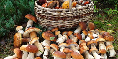 Лучшее время года. За грибами
