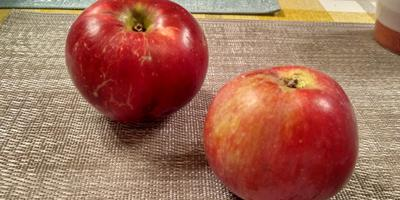 Первые яблоки. Помогите определить сорт