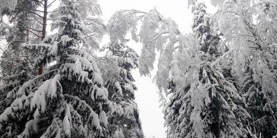 Зимы! Зимы ждала природа... Снег выпал только...в феврале!
