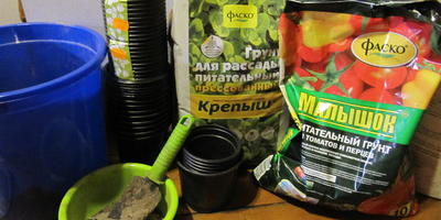Томат Медовый гигант. III этап. Развитие растений и уход за ними. Пикировка рассады