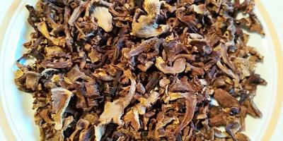 Лисичка - гриб красивый, гриб вкусный, гриб лечебный!