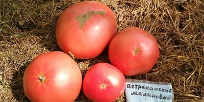Настоящие астраханские помидоры на подмосковной даче
