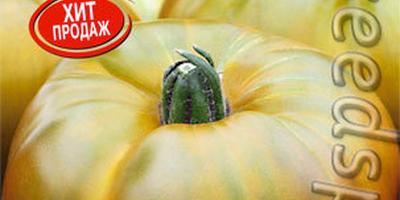 Сладкие зеленые помидоры. Удиви соседей по даче!