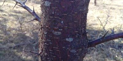 Помогите определить, что это за деревья?