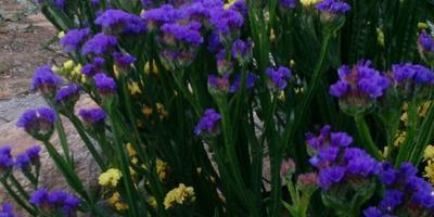 Освоение цветника