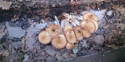 Мои любимые грибы-грибочки!