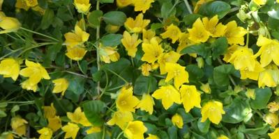 Альтернатива английскому газону, или Газон для ленивых (2 часть)