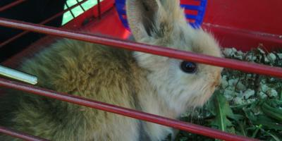 Кролик и веретено