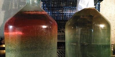 Почему изменил цвет березовый сок? Можно ли такой пить?