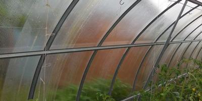 Подвязка томатов по Маслову: раскрываю секретную технологию