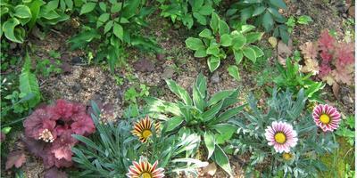 Мои цветы. Первая клумба