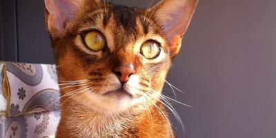 Кто здесь любит кошек?