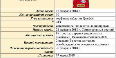 Петуния Василиса Премудрая F1. V этап. Пересадка
