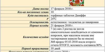Петуния Александра F1. Итоговый отчёт.