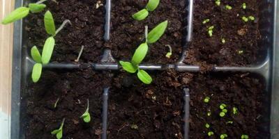 Домашняя работа №1. Школа защиты растений