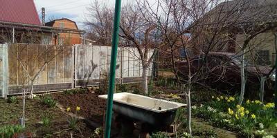 Домашняя работа №2. Плодовый сад весной: как защитить сад