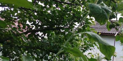 Домашнее задание 5. Как защитить плодовый сад весной и в начале лета
