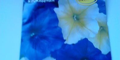 Петуния Марко Поло лимонно-синяя F1. Итоги тестирования