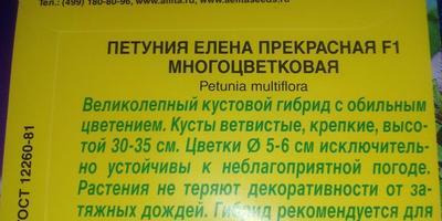 Петуния Елена Прекрасная F1. Итоги тестирования