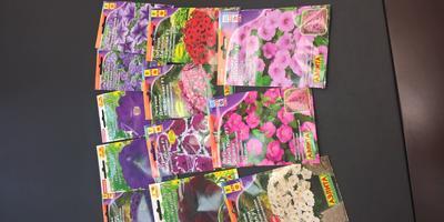 Отчет о получении семян петуний