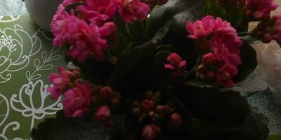 Помогите определить название цветка. Как за ним ухаживать?