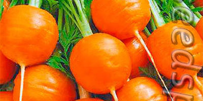 Девушки бывают разные, черные, белые, красные, но всем одинаково хочется на что-нибудь заморочиться))) А именно – на морковку!