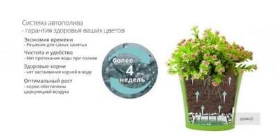 И чисто, и красиво, и стильно! Цветы в кашпо от seedspost.ru - это сильно!