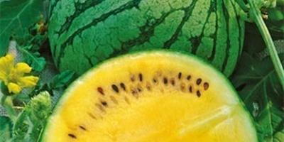 Поделитесь отзывами об арбузах с желтой мякотью