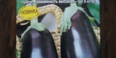 Баклажан Черный русский F1. Этап I. Посев