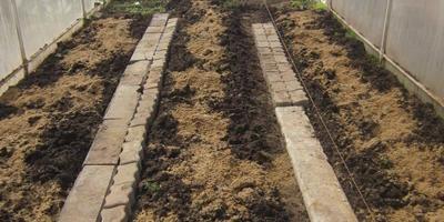 Подготовка теплицы для высадки томатов и перцев