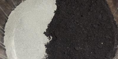 Томат Мишка на Севере F1, первого посева. III этап. Развитие растений и уход за ними. Пикировка рассады