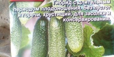 Огурец Деревенский разносол F1. I этап. Посев семян