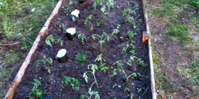 Домашнее задание №2: огород начинающих садоводов