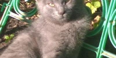 Наш котик Барсик