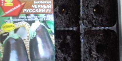 Баклажан Черный русский F1. I этап. Посев