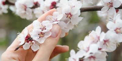 Урок 5. Как защитить плодовый сад весной и в начале лета