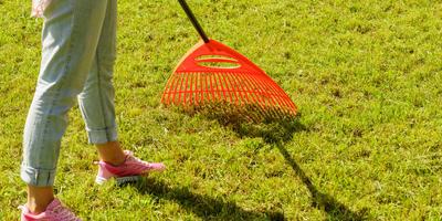 Урок 6. Здоровый и красивыйгазон без сорняков. Как этого достичь?