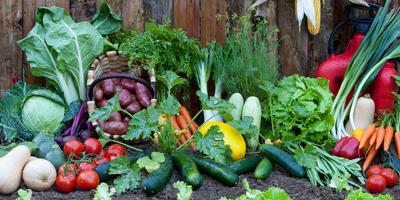 Урок 7. От чего и как защитить огородные культуры