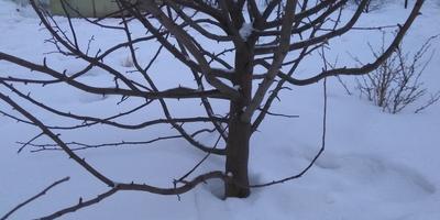 Как правильно провести обрезку дерева?