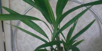 Помогите узнать название цветка!